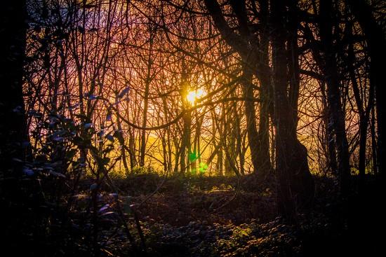 Dawn by swillinbillyflynn