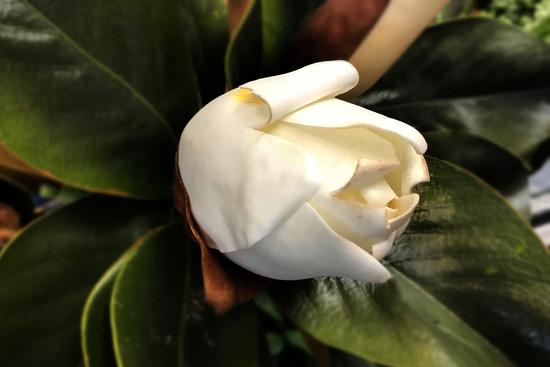 Peel Away the Petals by jaybutterfield