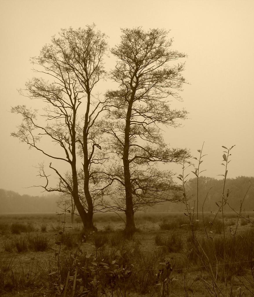 trees in sepia by gijsje