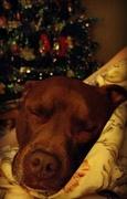 30th Nov 2017 - Sleepy Dog