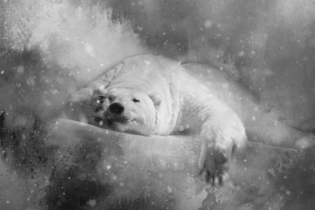 Polar Peekaboo by jesperani