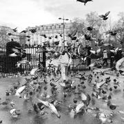 7th Dec 2017 - Feed the Birds 2p a Bag