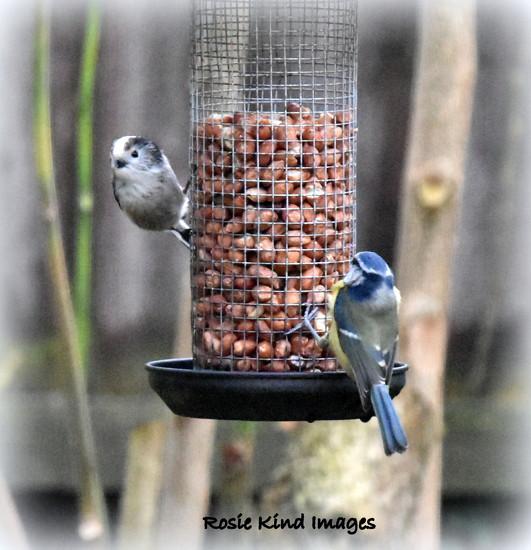Sharing the feeder by rosiekind