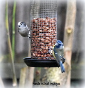 7th Dec 2017 - Sharing the feeder