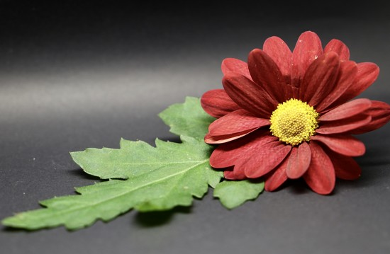 Macro Leaf & Flower by phil_sandford
