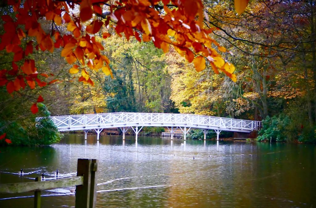 Hartsholme Lake Bridge by carole_sandford