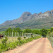 At the foot of the Helderberg........