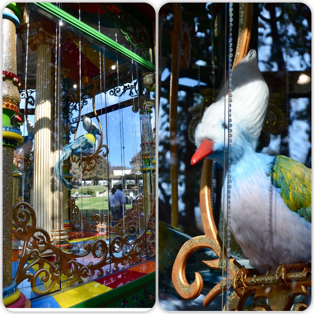 The Arboretum's 4 Calling Birds by louannwarren