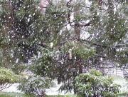 8th Dec 2017 -  It's Snowing!