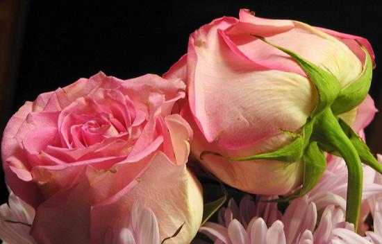 Roses on Black by homeschoolmom