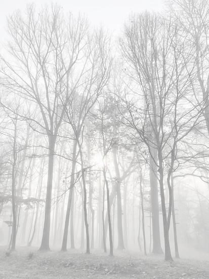 Winter trees by ksmale
