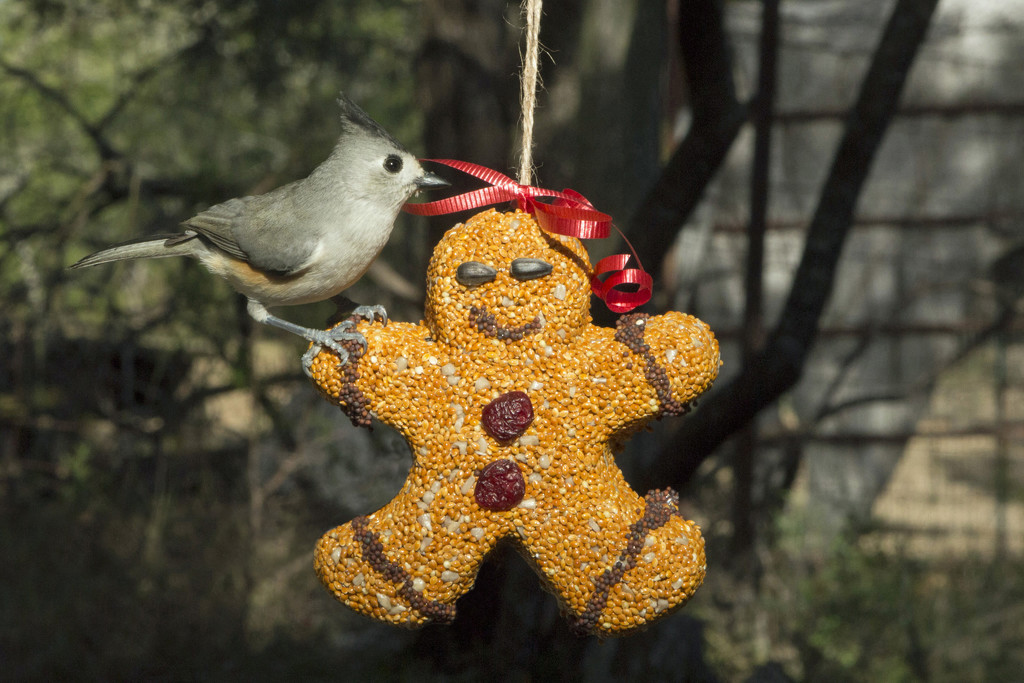 Gingerbread Man Seed Ornament by gaylewood