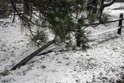 9th Dec 2017 - A little bit of snow