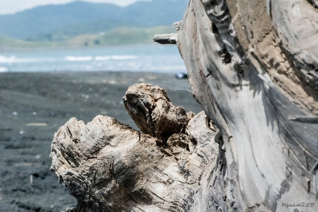 Driftwood by yorkshirekiwi