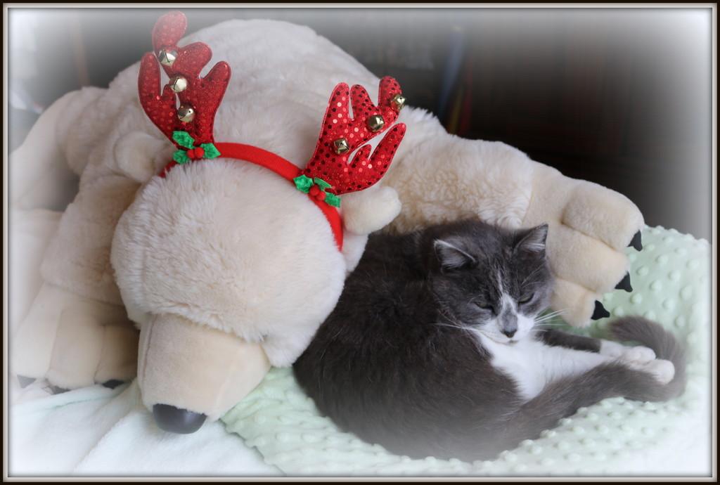 A big beary Christmas -  by gilbertwood