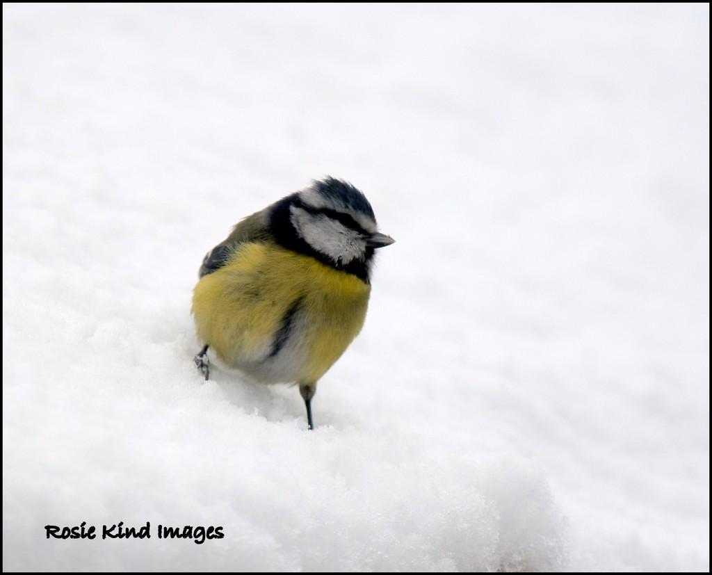 Knee deep in snow by rosiekind