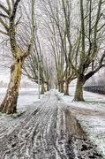 10th Dec 2017 - Plane tree avenue in the snow