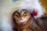 10th Dec 2017 - Madame Christmas