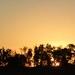 Sunset across the paddock
