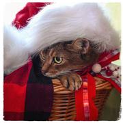 11th Dec 2017 - Santa in a basket