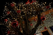 9th Dec 2017 - lights on a tree