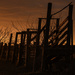 Cow Corral at Golden Hour by kareenking