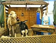 10th Dec 2017 - Nativity scene.