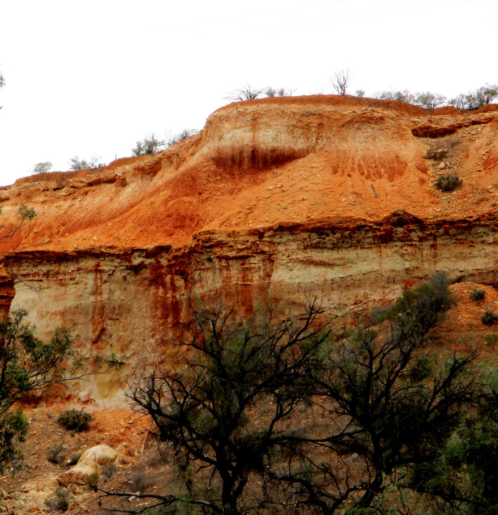 Colourful cliffs along the Murray River near Loxton.  South Australia by 777margo