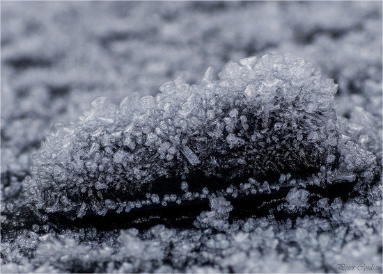 Ice Crystals  by pcoulson