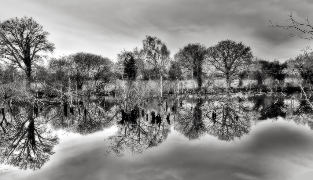 Swamp Reflections... by vignouse