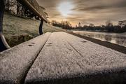 12th Dec 2017 - Frosty