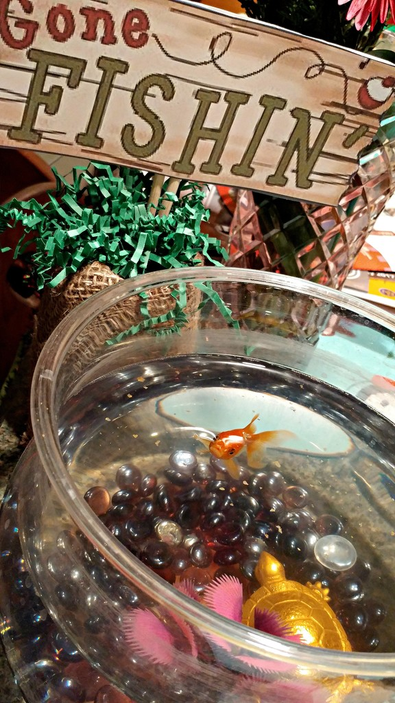 Worried Little Fish  by jo38