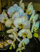 13th Dec 2017 -  Orchids still going strong......