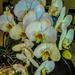 Orchids still going strong......