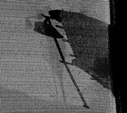 10th Dec 2017 - Shadow or silhouette?