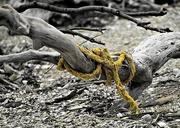 12th Dec 2017 - Tie a yellow ribbon