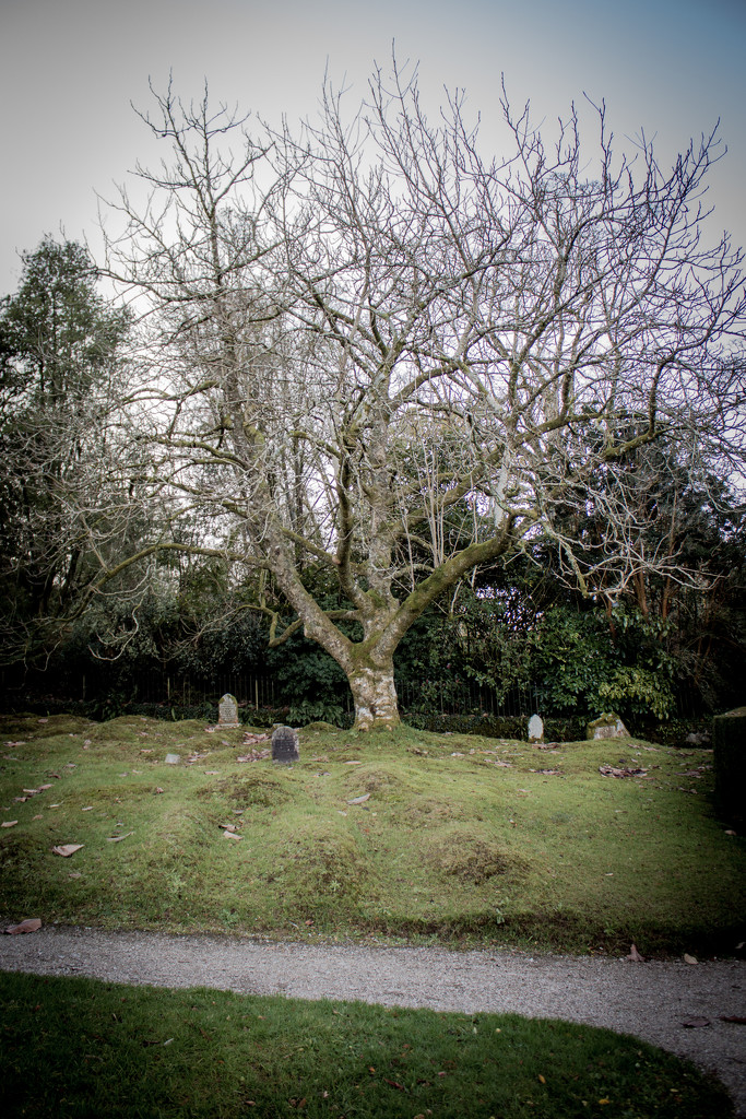 The unmarked graves by swillinbillyflynn