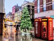 11th Dec 2017 - Strutton Ground Christmas tree