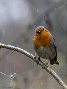 13th Dec 2017 - Standing in the rain
