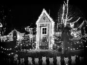 13th Dec 2017 - BW-Gardens Aglow