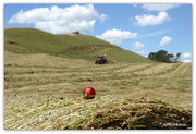 14th Dec 2017 - Christmas Bauble in the Hay Paddock...