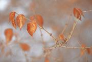14th Dec 2017 - Orange leaves!