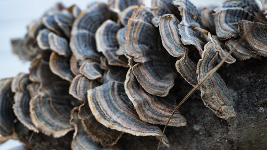 Concentric scallops by randystreat