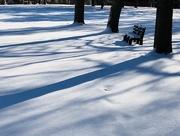 14th Dec 2017 - snow &shadows