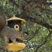 Raiding the Bird Feeder by gaylewood