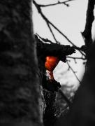 6th Dec 2017 - The secret heart of the tree...