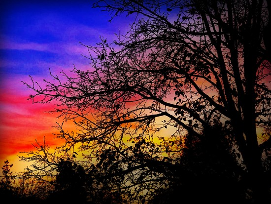 A Different Color by gardenfolk