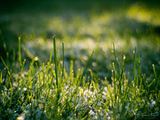 10th Dec 2017 - If my husband would just forget to mow the lawn…