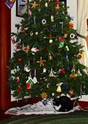 15th Dec 2017 - Kiki getting into the Christmas spirit.