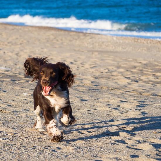 Fun at the beach by laroque